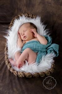 Evergreen newborn photography